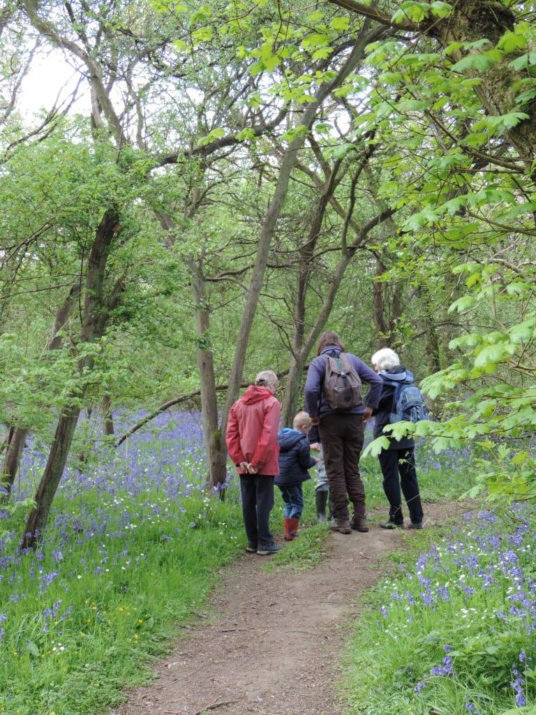 Great Fen Wildlife Watch - Walk at Lady's Wood, Upwood